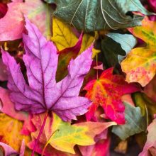 Improving Your Chances of Selling in the Fall